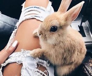 bunny, nails, and rabbit image