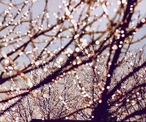 christmas, bokeh, and fairy lights image
