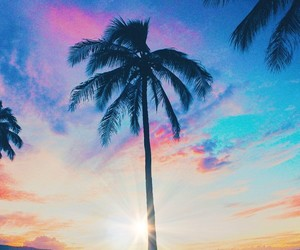 sky and palms image