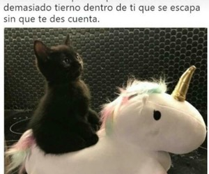 cats, tierna, and Gatos image