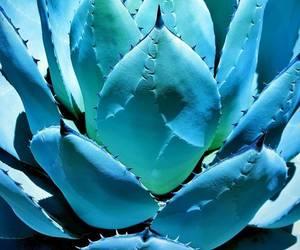 blue, plants, and succulents image