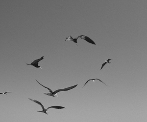 beach, birds, and black and white image