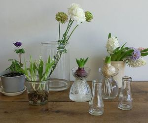 anemone, Blanc, and hyacinth image