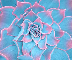 blue, nature, and pattern image