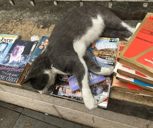 animal, book, and cat image