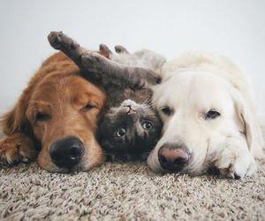 dog, cat, and pet image