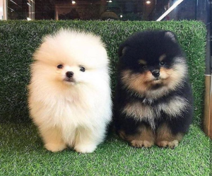 black, puppies, and fluffy image