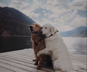 animals, companionship, and mans best friend image