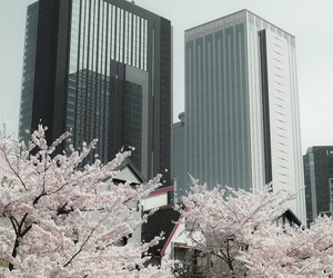 flowers, korea, and pastel image