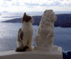 cat, animal, and lion image