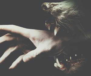 hemlock grove, series, and wolf image