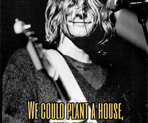 breed, grunge, and kurt cobain image