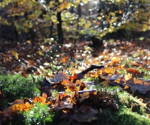 autumn, photography, and forest image