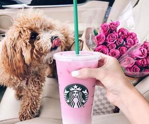 dog, starbucks, and animal image