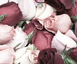 background, pale, and roses image