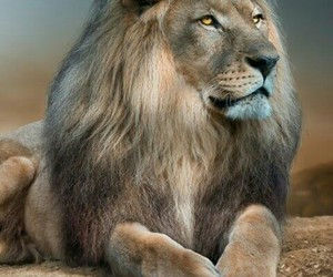 jungle, lion, and king image