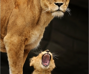 animals, baby lion, and cute lions image
