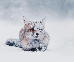 snow, fox, and animal image