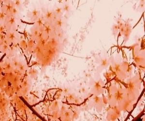 aesthetic, peach, and peach aesthetic image