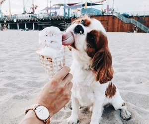 adorable, beach, and pet image