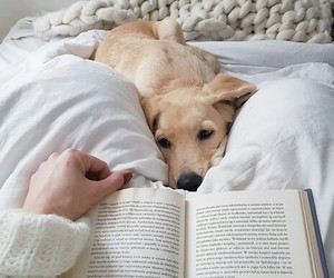 animal, book, and cozy image