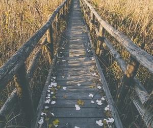 flowers, nature, and bridge image