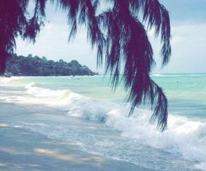 beach, palmtree, and palms image