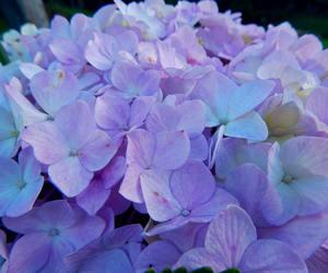 blue, flower, and garden image