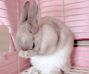 cute, aesthetic, and bunny image