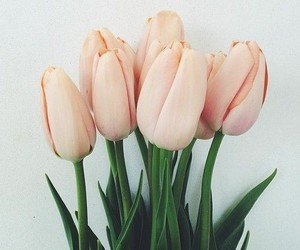 flowers, photography, and tulip image