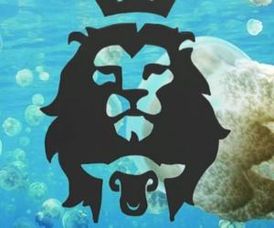 Animais, animals, and blue image