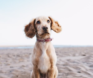 adorable, beach, and photography image