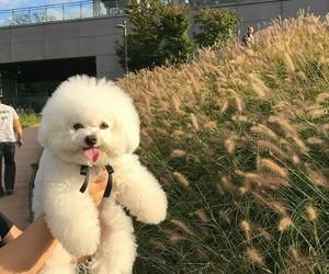 aesthetic, animals, and dog image