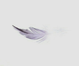 feather, gray, and moodboard image