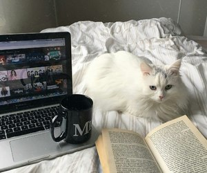 book, cat, and home image