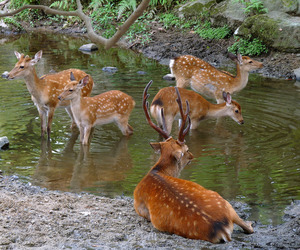 deer, wild, and fawn image