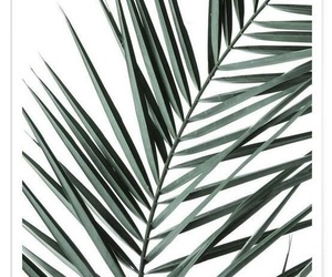 green, inspo, and plant image