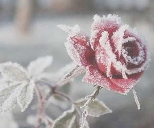 beautiful, flowers, and snow image