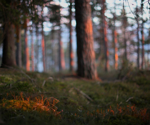 forest, grass, and sunset image