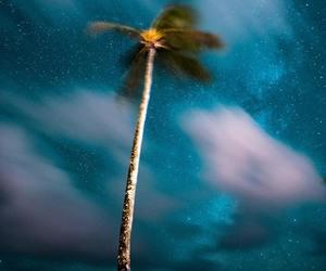 palm tree and palms image