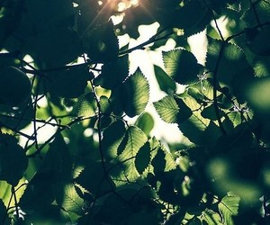 green, nature, and sun image