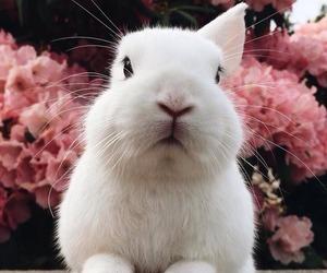 animals, rabbit, and white image