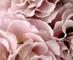aesthetics, pink, and flowers image