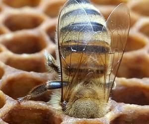 animals, bees, and insects image