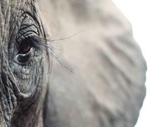 animals, grey, and wildlife image