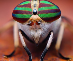 animals and insects image