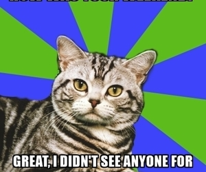 cat, cats, and sarcasm image