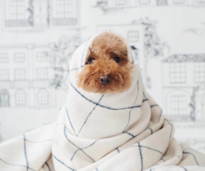 blanket, pup, and december image