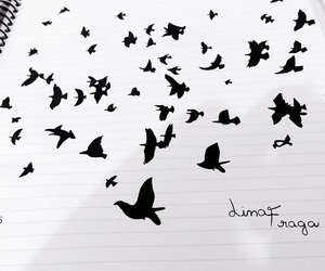 birds, black and white, and draw image