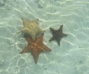ocean, beach, and starfish image